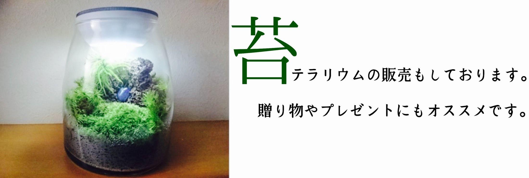 長野県松本市|サンドペインティング販売|サンドアート資格受講|苔販売|苔テラリウム|ビスマス結晶|クラフト作品|リアリゼーション